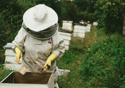 3rd Australian Bee Congress