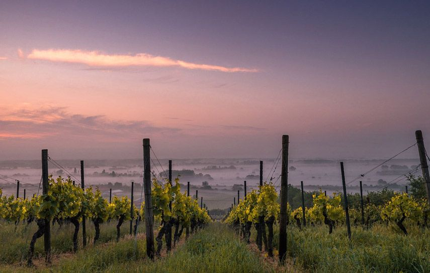 14th Annual Critical Care Conference in the Vineyards
